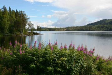 Week 45 - Tierp to South Lapland